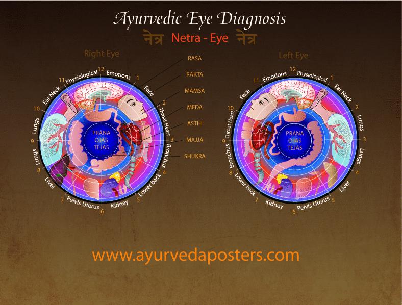 Eye Diagnosis Iridology Chart 8 5 X 11