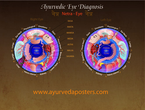 Eye Diagnosis Iridology chart 8.5 x 11