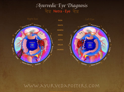 Eye Diagnosis Iridology Poster 18x24