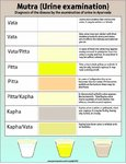 Ayurvedic Urine Diagnosis Chart