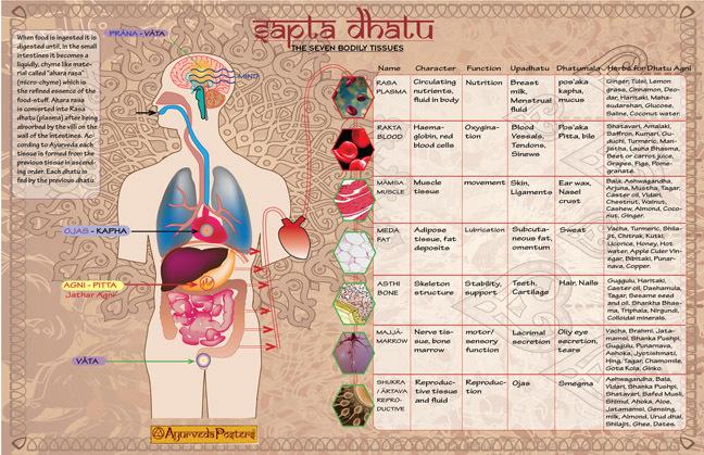 Sapta Dhatu Vinyl Banner Ayurveda Posters