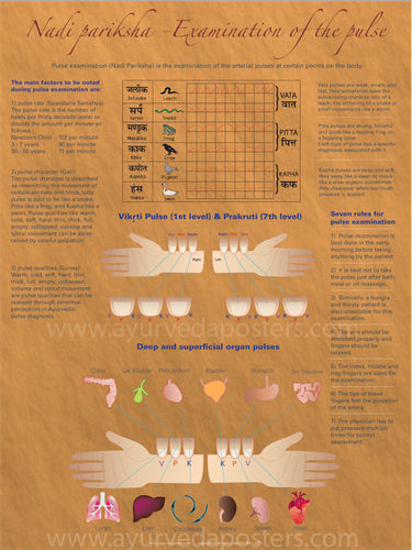 Ayurvedic Pulse diagnosis Posters